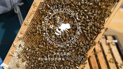 【都市養蜂】Beetopiaはらじゅく様動画