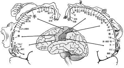 脳内マップ.jpg