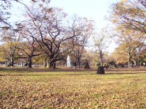 yoyogipark091121.jpg